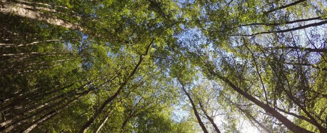Natura / parchi / aree protette