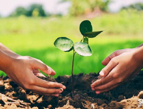 Con l'agricoltura sostenibile e biologica si cresce